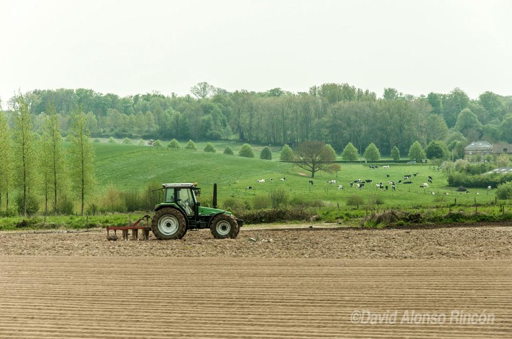 Una estampa rústica muy común en este área de Bélgica. ©David Alonso RIncón