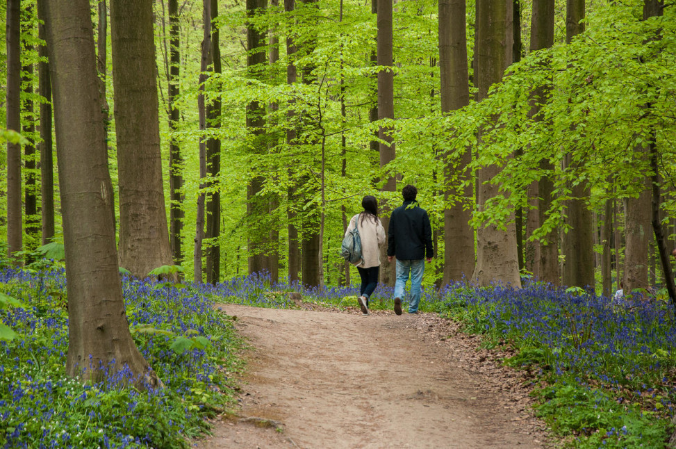 bosque-hallerbos-belgica-bruselas-01-10