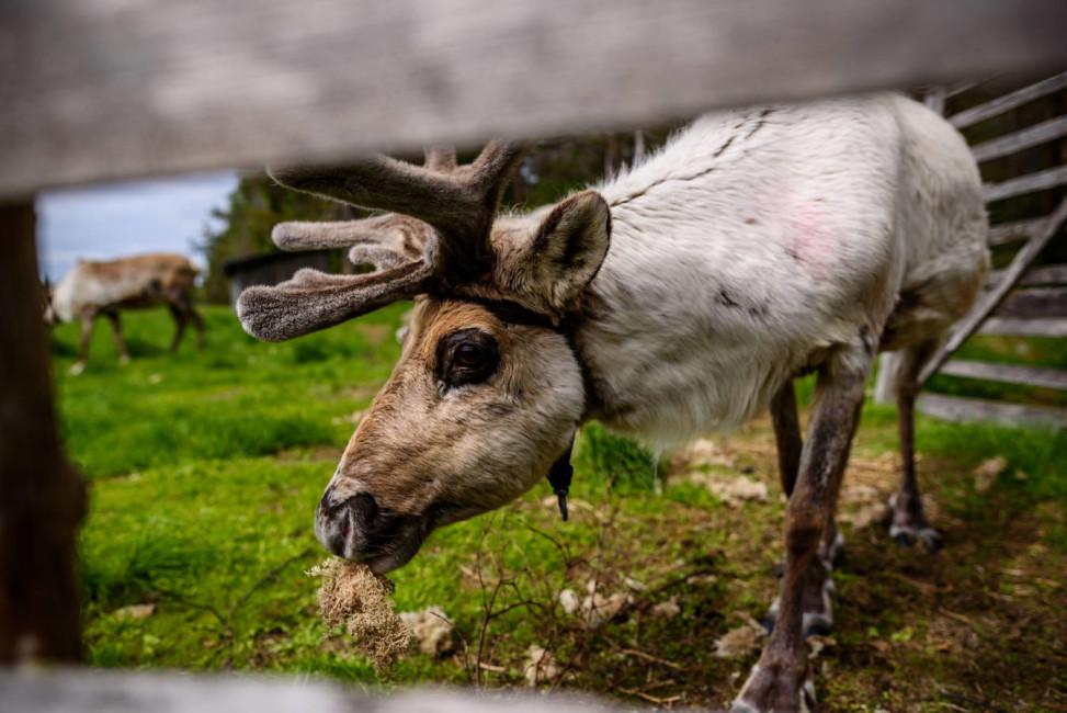 finlandia-laponia-viaje-parques-nacionales-verano-16