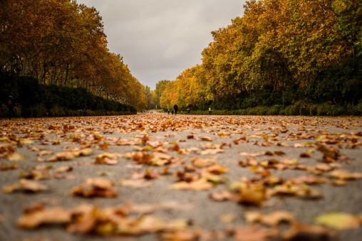 paseo-otono-parque-el-retiro-madrid-20-11-2018-14